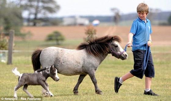 Самая маленькая лошадь в мире (25 фото).