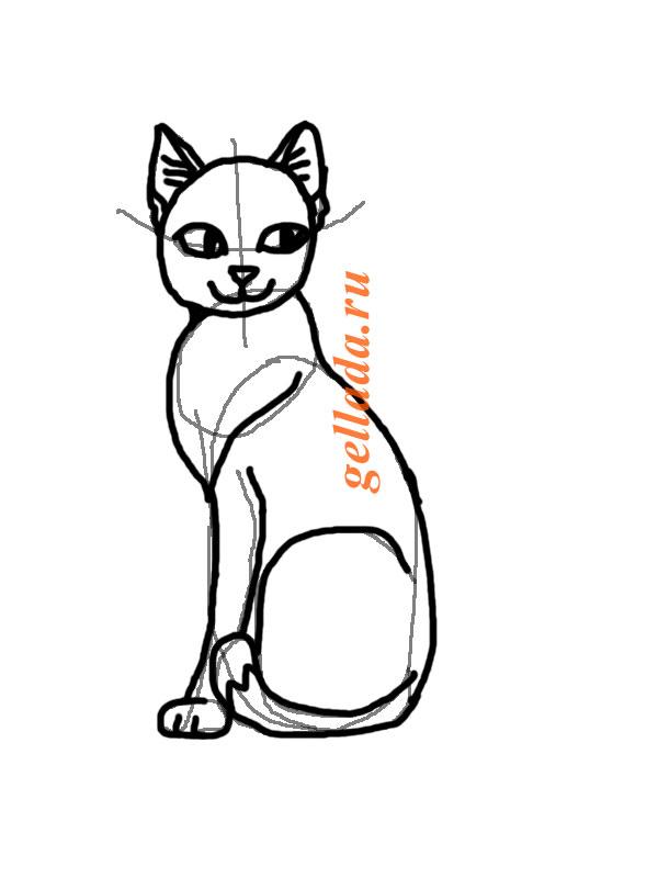 Кошка сфинкс раскраска