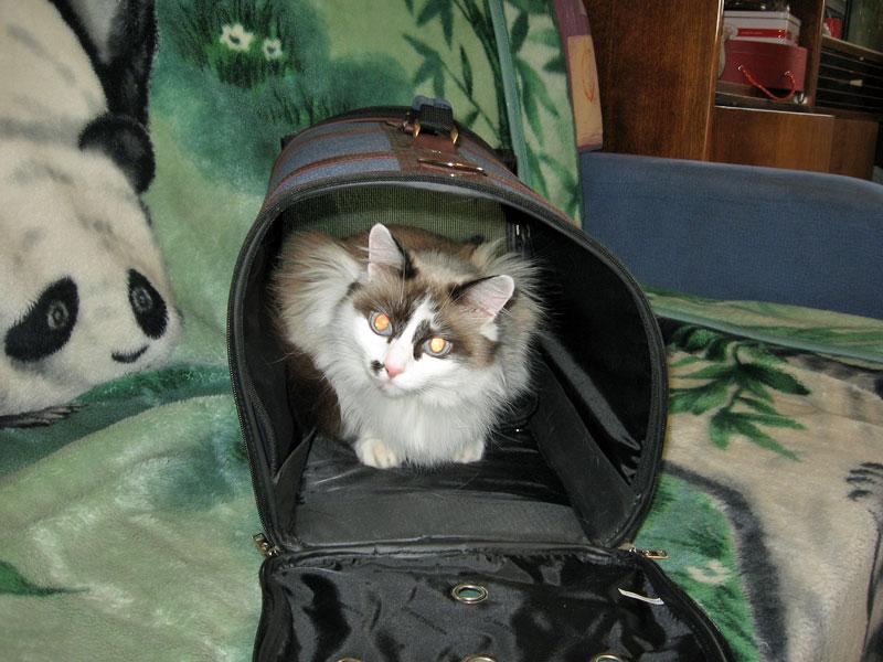 Переноска для кошки.